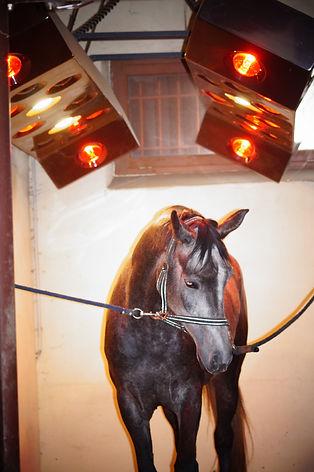 centre de soins pour chevaux, écurie de pré-entrainement, obstacle, débourrage, repos chevaux de courses, dynamial