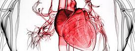 heart light opacity.jpg