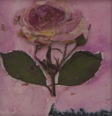 Pink Rose by Sandra Merlini - sold