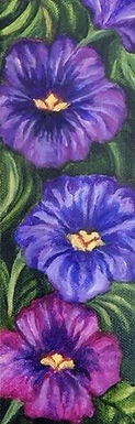 Morning Glories by Sue Carlin