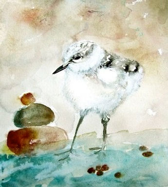 Calidris by Jodie Apeseche - Giclee