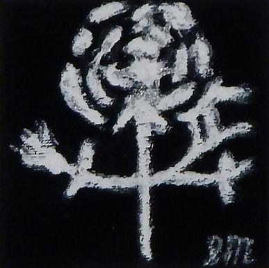 White Redoute Rose on Black Velvet by Sandra Merlini