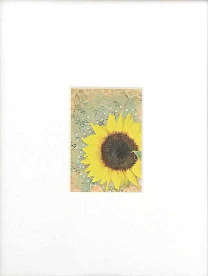 Sonnenblume by Linda McLatchie