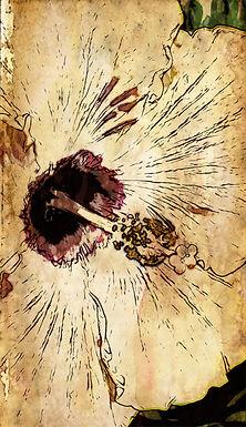 Hibiscus Haiku by Linda McLatchie (framed)
