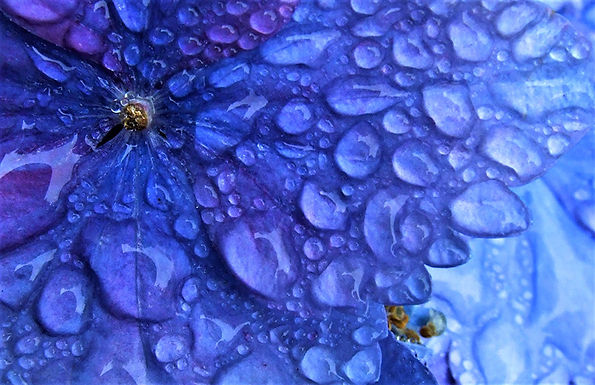 After the Rain by  Lyle Lanham HONORABLE MENTION