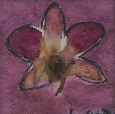 Purple Orchid by Sandra Merlini