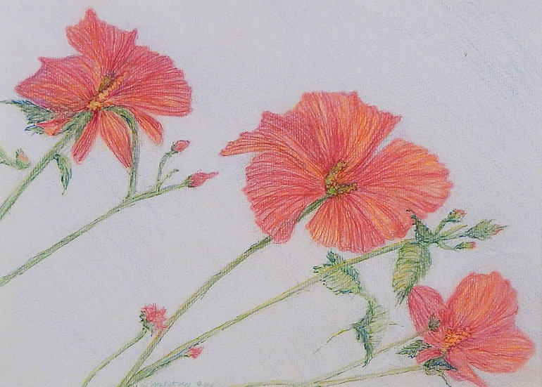 Hibiscus Reaching by Susan Alatalo