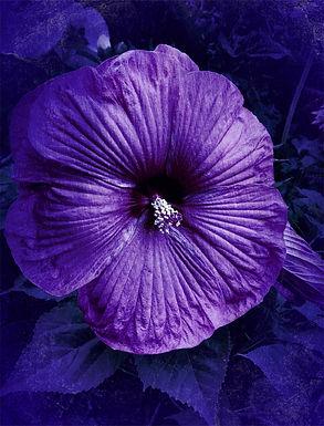Purple Rain by Linda McLatchie