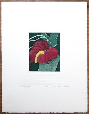 Anthurium by Michael Bush