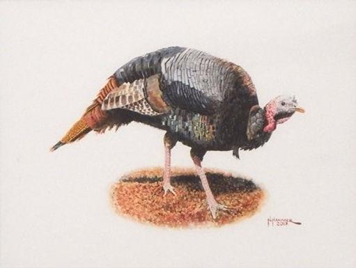 Wild Turkey by Nelson Hammer