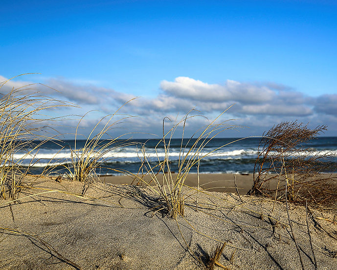 Dune View by Roberta Anslow