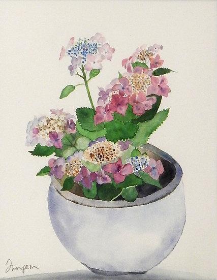 Hydrangeas by Joanne Thompson