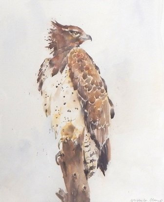 PEOPLE'S CHOICE WINNER: Martial Eagle by Michele Clamp -SOLD