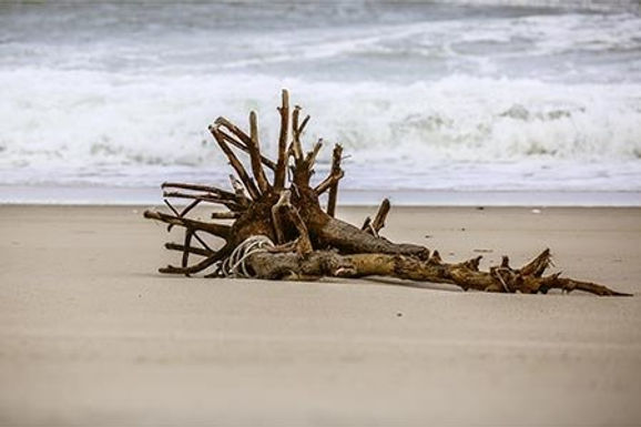 Rooted by Roberta Anslow