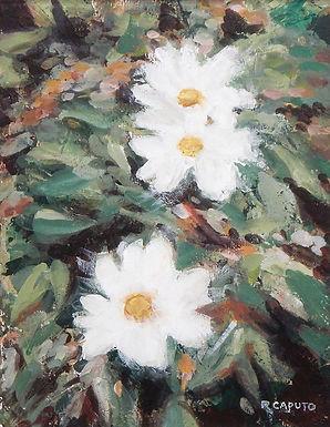 Wild Flowers by Ralph Caputo