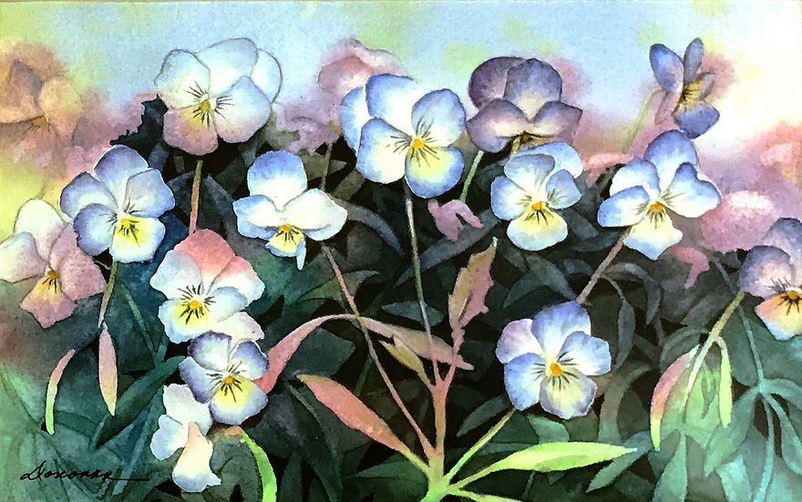 Pansies by Joanne Donovan