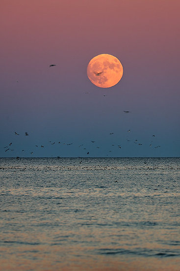 Super Moon Rising by Roberta Anslow