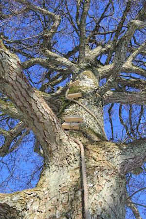 Træet