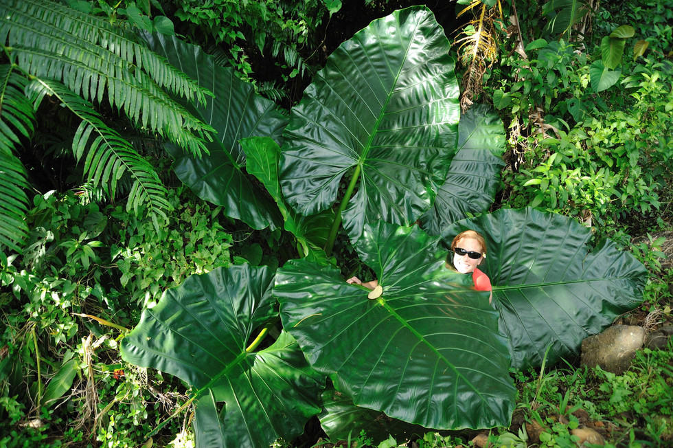 One of the largest leaves in the world