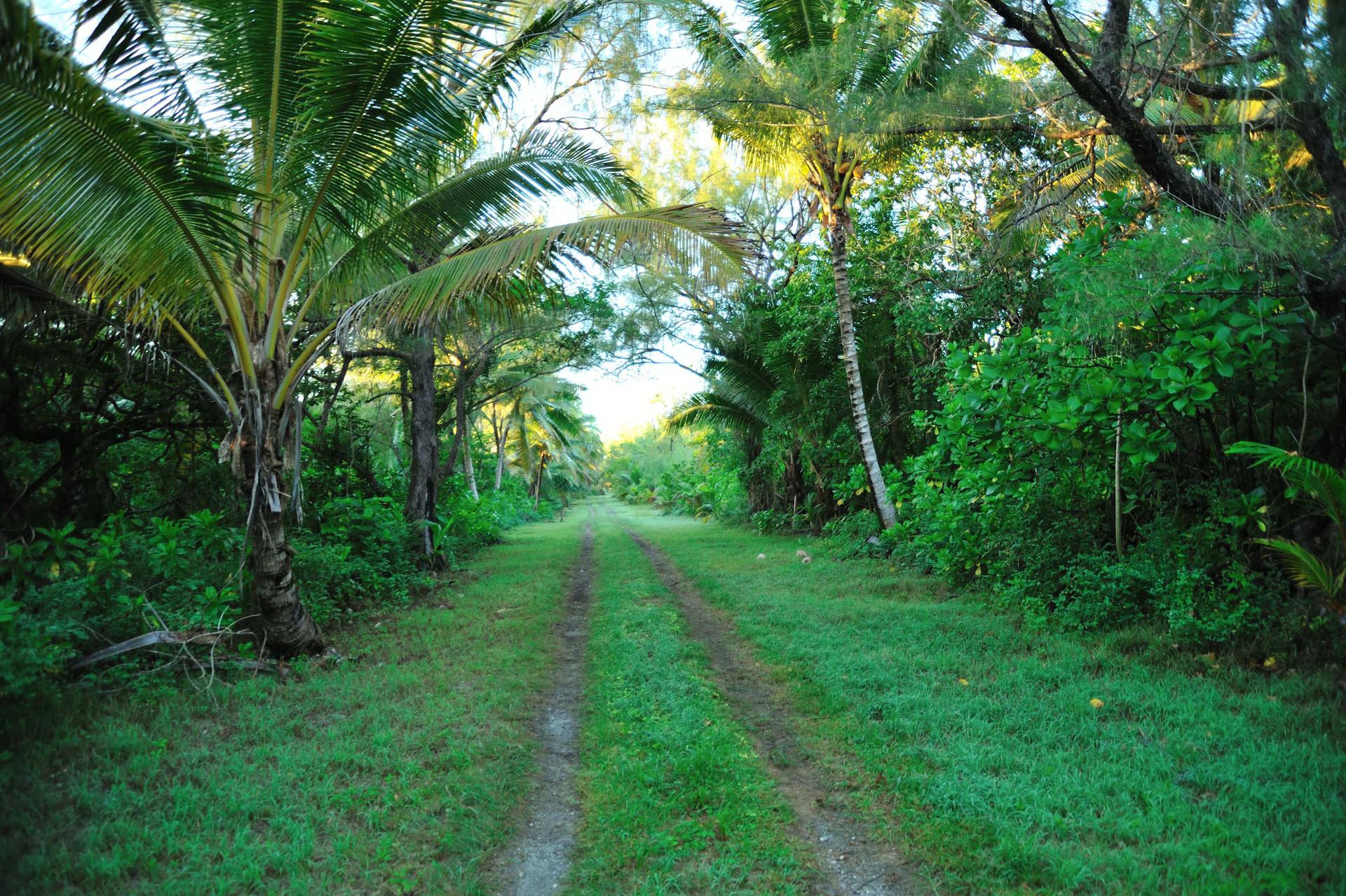 The road around the island