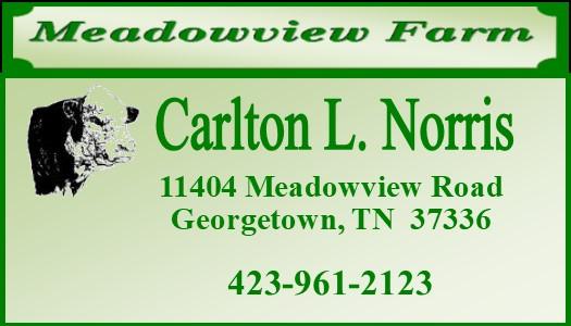 meadowview banner.jpg