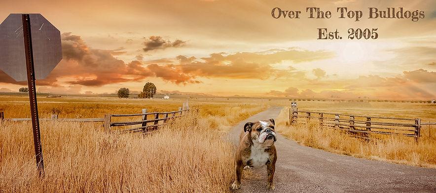 bulldog%20card_edited.jpg