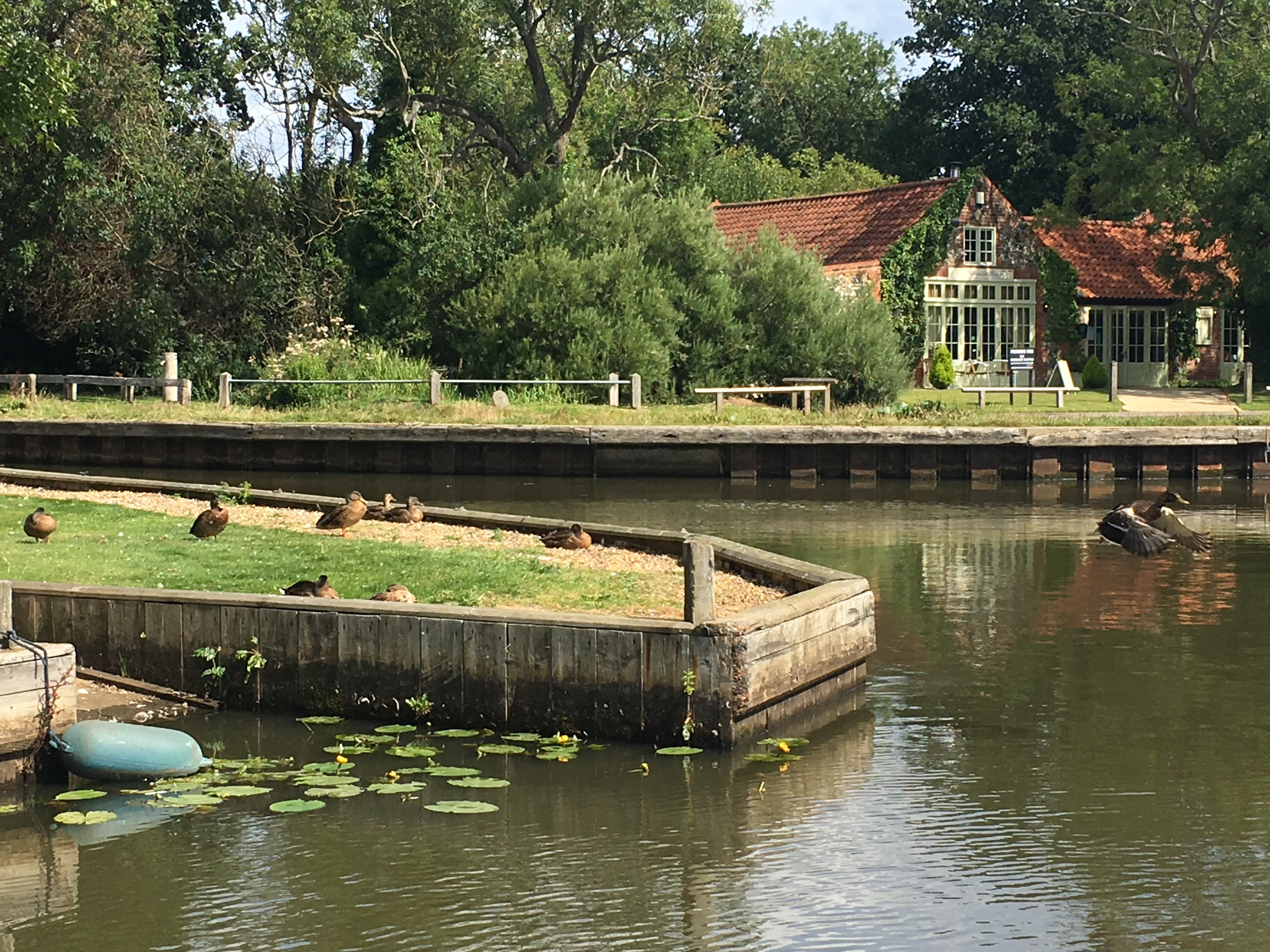 Ducks on the staithe