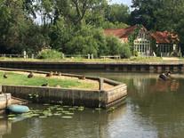 Ducks on the Staithe