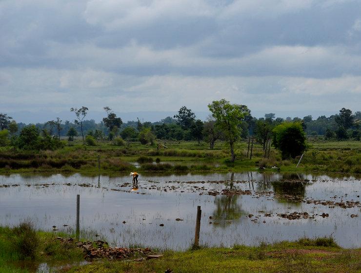 wetland (MSV2).jpg
