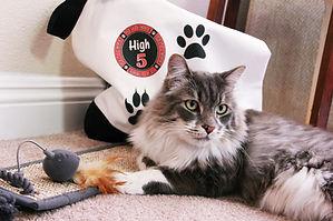 High5PetCare_Cat Sitting.jpg