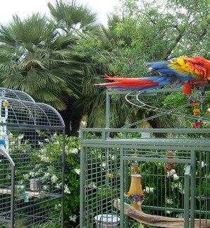 Parrots on the move.jpeg