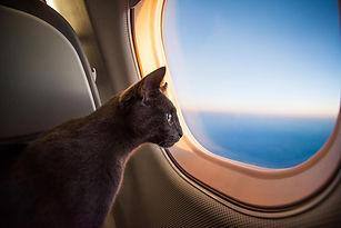 JET-A-PET International_Cat on plane fly