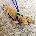High5PetCare_Reptile Sitting.jpg