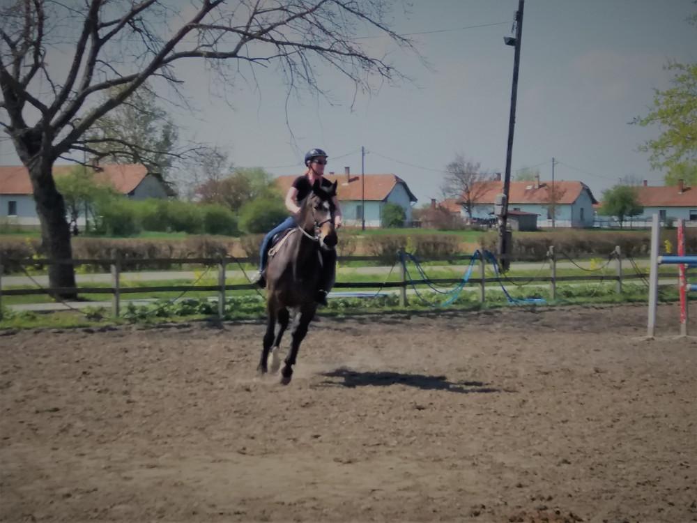 רוכבת על סוס הרבעה-צלמו אותי