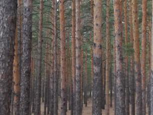 קזחסטן-טבע פראי בבוראביי