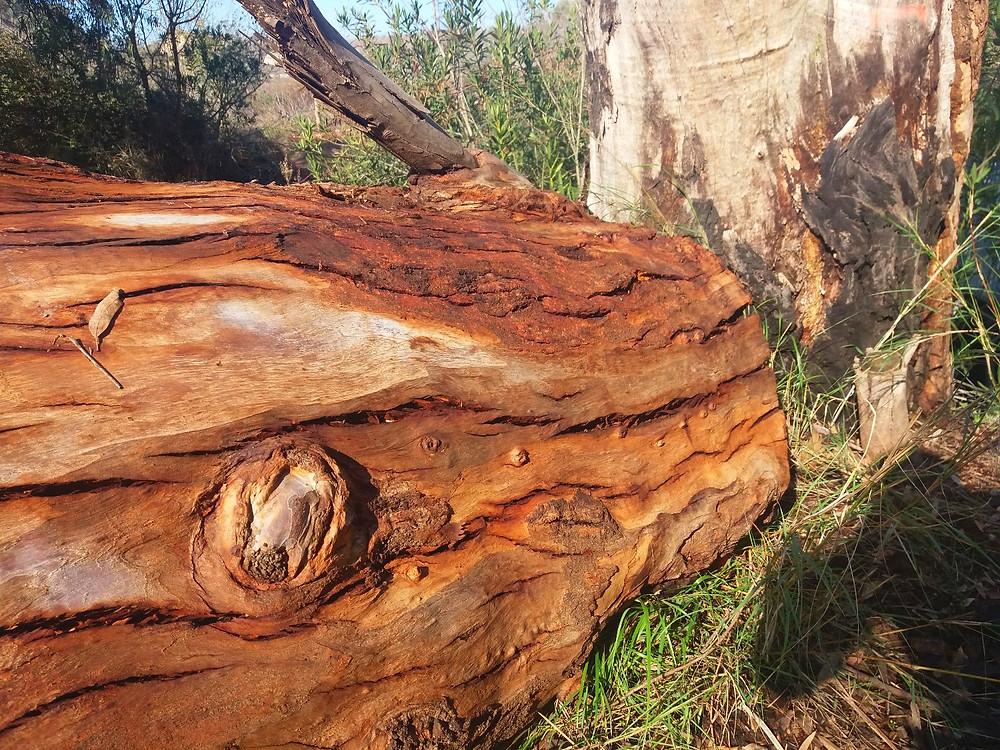 עצים הם חברי-צלמה גילי מצא