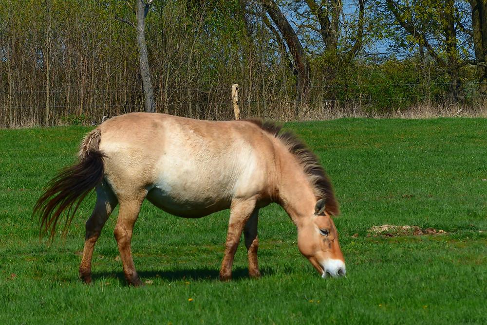 סוס הכלאה בערבה-צלמה גילי מצא