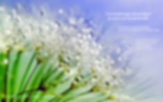 Webinaire Aroma énergétique.23.05.20.j