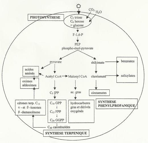 Synthèse des molécules aromatiques