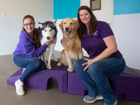 Happy Pets Palace - Doggy Daycare