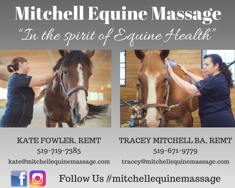 Half Page Mitchell Equine Massage