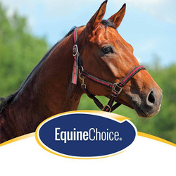 Equine Choice
