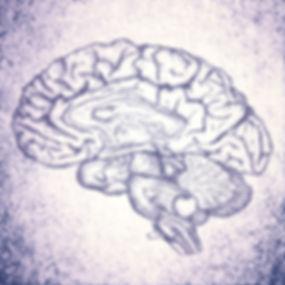 Brain Sketch_edited_edited.jpg