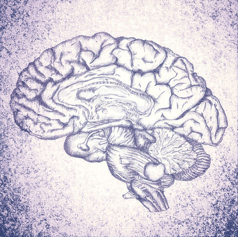Brain Sketch_edited_edited.jpg