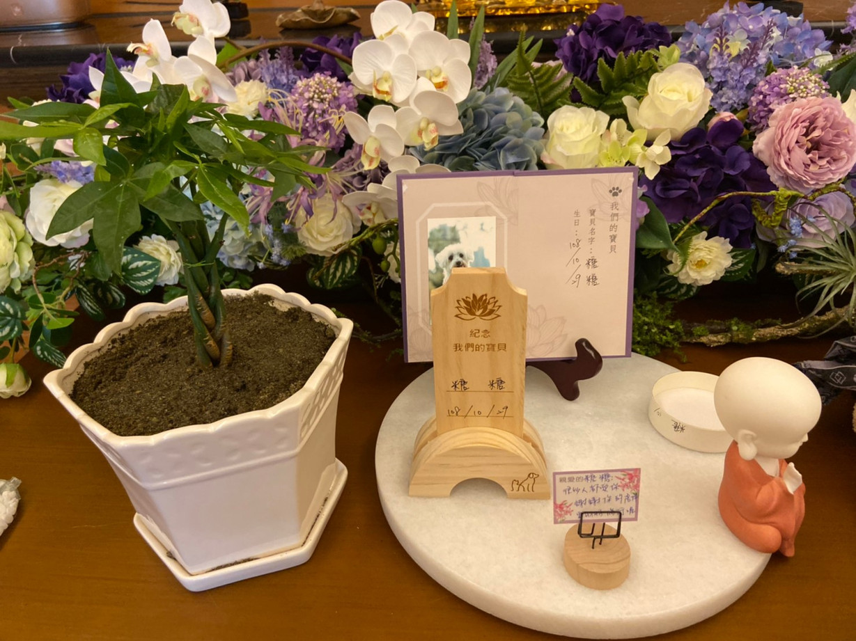 20191104_糖糖盆葬_191104_0002.jpg