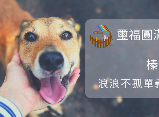 璽福圓滿彩虹城堡 X 榛果手繪 浪浪不孤單 義賣競標活動即將開跑!!