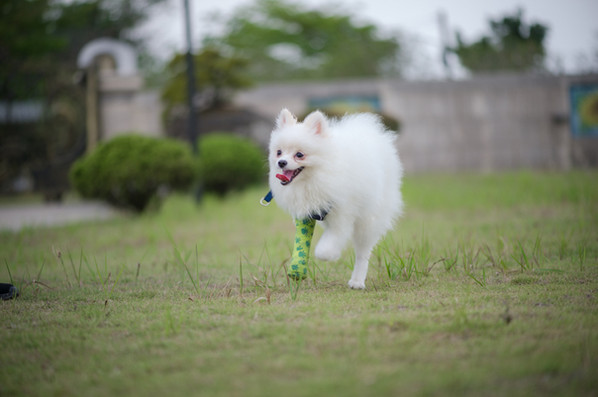 彩虹城堡 草原寵物奔跑區