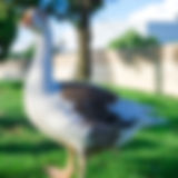 _DSC3245_edited.jpg