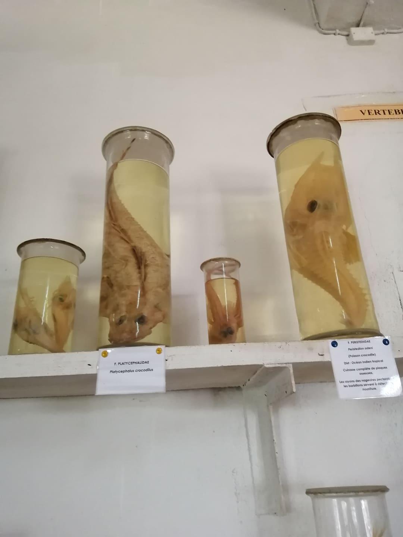 musée du CNRO, Nosy Be, Madagascar