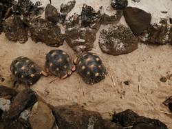 Les tortues à protéger